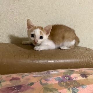 玉三郎  1ヶ月半の男の子
