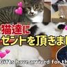 【保護猫達に】プレゼントを頂きました