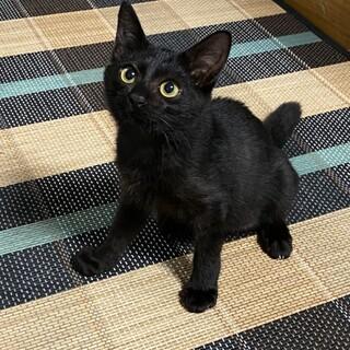 黒猫るかちゃん