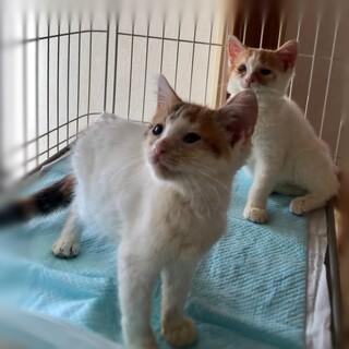 【保護猫】子猫×2★この連休中にいかがでしょう?