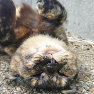 口に釣り針が刺さっていました☆1歳半のサビ猫