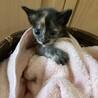 可愛いサビ猫ちゃんです