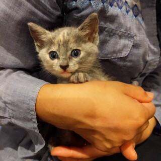 グレー系の淡い色のサビ猫ちゃん