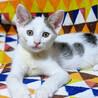 生後2ヶ月。抱っこ大好き甘えん坊。猫や犬と仲良し