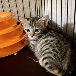 『Terra里親会猫部』 サムネイル1