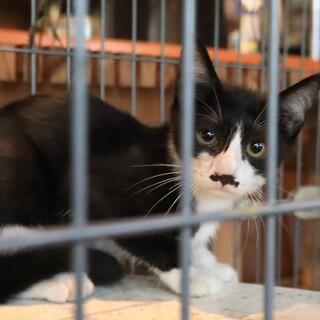 ヒゲさん猫4ヶ月(恐らく♂です)