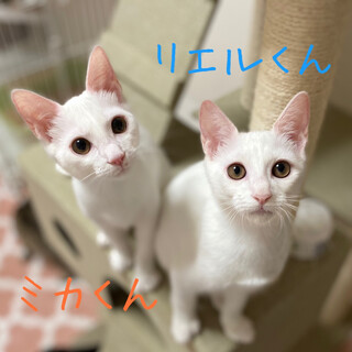 【明日9/20譲渡会】リエルくん&ミカくん