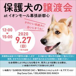 保護犬 譲渡会@イオンモール 幕張新都心 豊砂公園