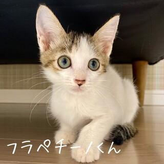 【明日9/20譲渡会】フラペチーノくん