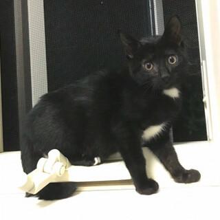 可愛いゴロゴロ黒猫、グラくん♪