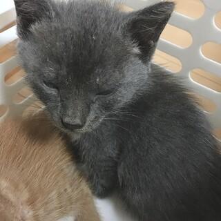 ①子猫  生まれて1ヶ月ほどです。