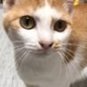 【9/27⭐️堺東にて里親会】参加猫レミちゃん