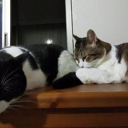 「猫白血病ウイルスが他の猫に感染するかどうかについて」サムネイル1