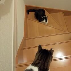 「猫白血病ウイルスが他の猫に感染するかどうかについて」サムネイル2