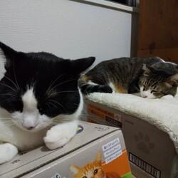 「猫白血病ウイルスが他の猫に感染するかどうかについて」サムネイル3