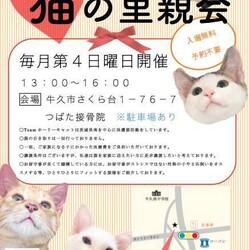 猫の里親会 in 牛久  茨城県