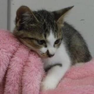 里親様を待っています。子猫♂155
