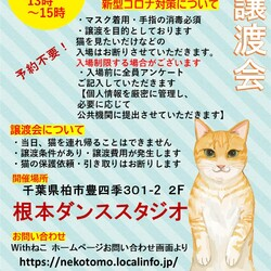 11/1(日)猫カフェ風保護猫譲渡会