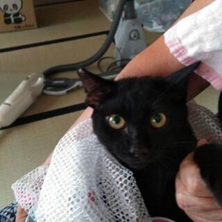 エイズキャリア◎ちょっぴりシャイな黒猫