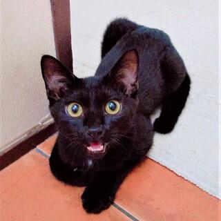 お話し猫りゅうくん❣
