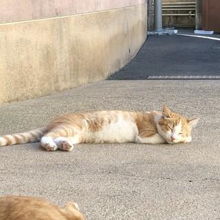 きれいな顔立ちの子猫ちゃん チビA