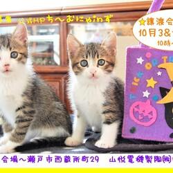 猫の譲渡会 IN 瀬戸 ~ ちーむにゃいんず 2020年10月03日開催