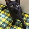 活発な黒猫くん4か月