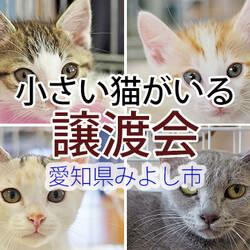 小さい猫中心に30匹の譲渡会-愛知県みよし市