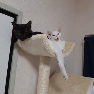 グレーと白猫
