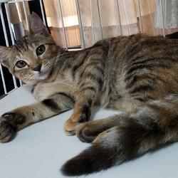 保護猫譲渡会:waiwaiドームしもつま サムネイル3