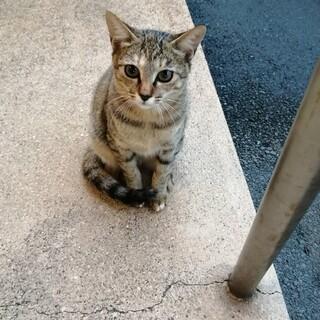 びびりの子猫ちゃん チビD