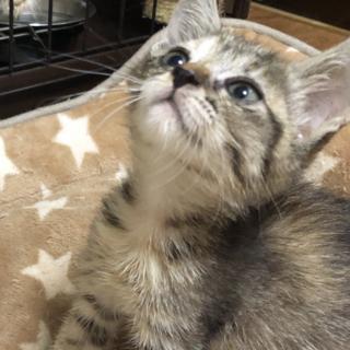 可愛らしいキジ猫ちゃん