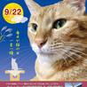 さいたま市 新都心東広場(コクーン側)「保護ねこ譲渡会」14時~開催