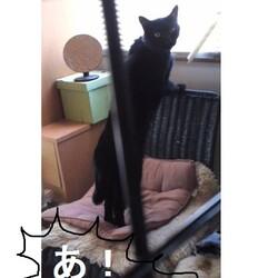 我が家のじっちゃん猫③