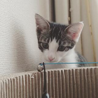 生後3ヶ月キジシロ子猫☆