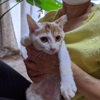 美猫ミケちゃん