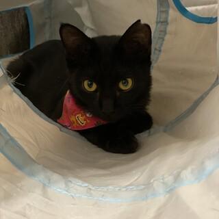 抱っこ大好き。人馴れ度300%黒子猫