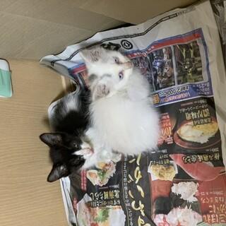 子猫2匹を保護しています。里親募集中です。