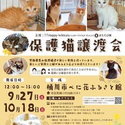 保護猫譲渡会☆樋川市べに花ふるさと館
