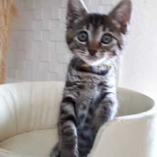 3ヶ月弱 位  人も猫も大好き ドールちゃん!