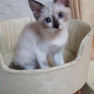 3ヶ月弱位  人も猫も大好き ラグちゃん!