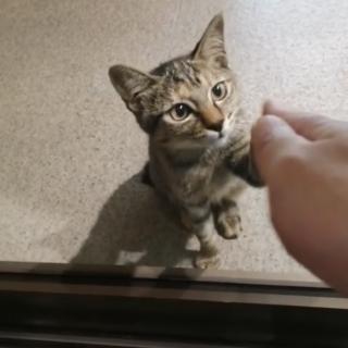 可愛いキジ猫ちゃん チビC