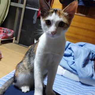 約5ヶ月の元気な子猫です。5兄弟姉妹です。