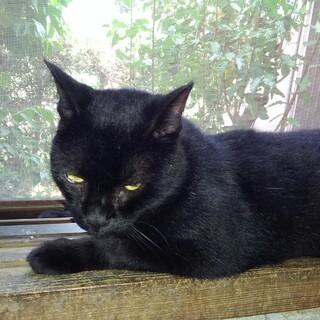 毛並みのきれいな黒猫ちゃんその3