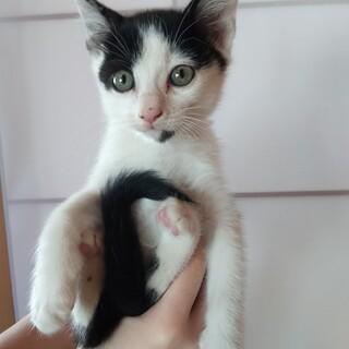 白黒ミックスの子猫