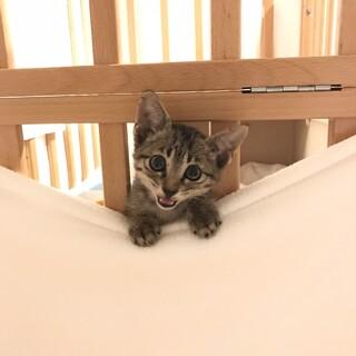 生後1ヶ月!甘えん坊な子猫
