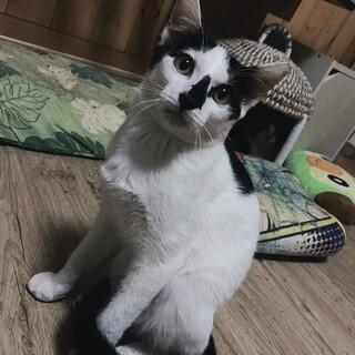 白黒ぶちのアンドレくん♂