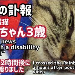 【突然の訃報】障害猫こむぎ3歳