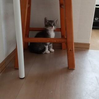 保護猫を迎えよう!No.64ちゃん!