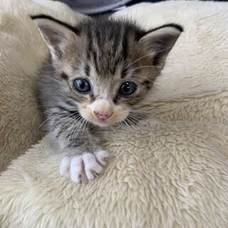 小さい子猫ちゃんの里親募集